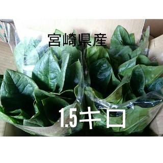 おっきなほうれん草 1.5キロ以上 箱パンパン(野菜)