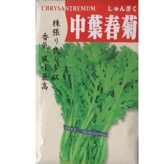 ★種子法廃止反対 在来固定種子・種子消毒なし「中葉春菊」家庭菜園向け(野菜)
