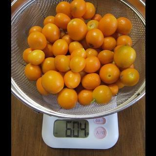 金柑(キンカン)無農薬 約850g  ④(フルーツ)