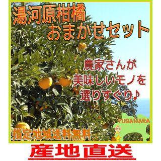 5㌔詰め合わせ🍊かんきつ色々セット柑橘 ご家庭用 産地直送 数量限定(フルーツ)