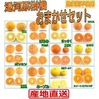 5㌔セット🍊かんきつ色々詰め合わせ!!柑橘 ご家庭用 産地直送 数量限定(フルーツ)