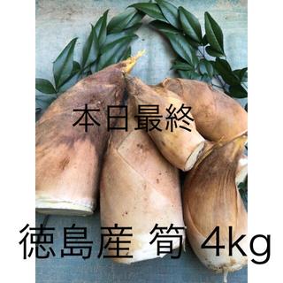 徳島 阿南産 筍 4kg
