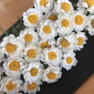 花かんざしドライフラワー(ドライフラワー)