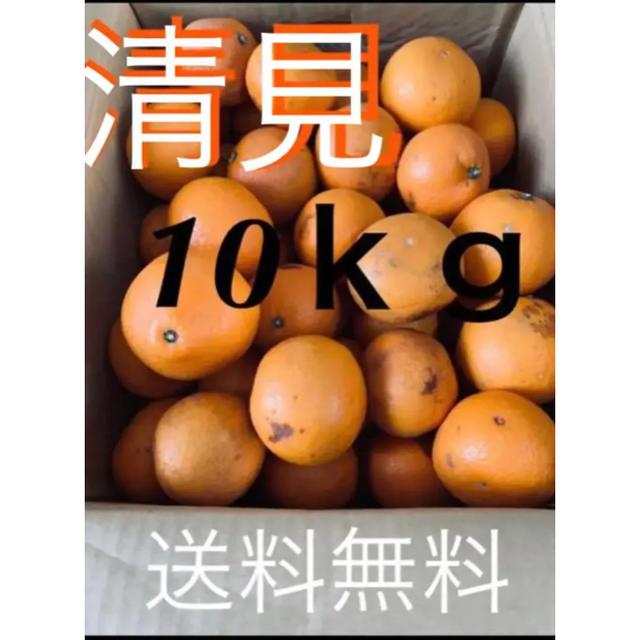和歌山県 傷あり訳あり清見オレンジ約10kg 食品/飲料/酒の食品(フルーツ)の商品写真