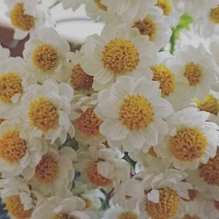 花かんざし ドライフラワー30本(ドライフラワー)