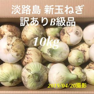 [訳あり品] 淡路島 新玉ねぎ 10kg以上 早い者勝ち