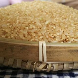 玄米5kg ▶真空パックで発送します(米/穀物)