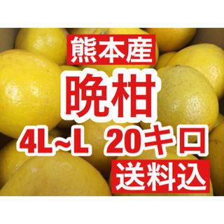 熊本産 河内晩柑(ジューシーオレンジ)  家庭用20キロ L〜4Lサイズ 送料込(フルーツ)