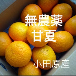 小田原産  無農薬  甘夏  7kg   産地直送   送料込み