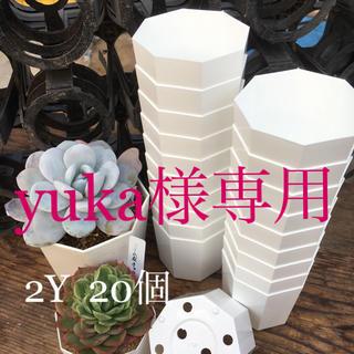 yuka様専用★八角プラ鉢2Y&2.5Y(プランター)