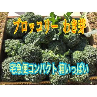 ブロッコリー わき芽 減農薬 農家直送 宅急便コンパクト 箱いっぱい