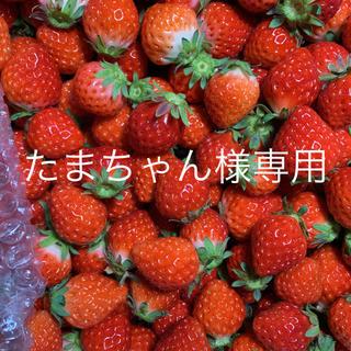 たまちゃん様専用●小粒苺2kg●さがほのか●クール送料込(フルーツ)