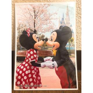Disney - 桜シリーズ 実写 写真♡