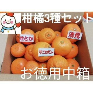 ③柑橘Se tお徳中箱❗デコ&せとか&清見♥️雪だるまより