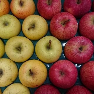 値下げ!りんご 星の金貨&ふじ(有袋)5kg 23玉(フルーツ)