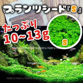 たっぷり10〜13g(発芽実証済)60-90水槽 プランツシード 水草の種(アクアリウム)