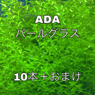 アクアデザインアマノ(Aqua Design Amano)のADAパールグラス(アクアリウム)