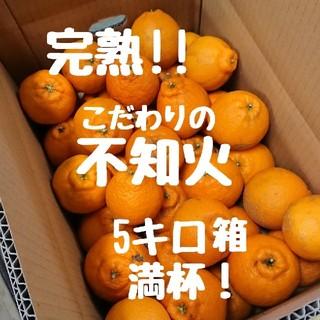完熟!!不知火(デコポン) 5キロ箱満杯 ご家庭用(フルーツ)