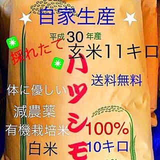 ✳️30年度✳️11月5日に稲刈り白米10キロ(米/穀物)