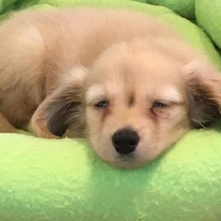 アイ(i)のあ(犬)
