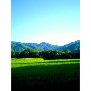 ワンコイン!新米30年度山口県阿東産コシヒカリ玄米約1kg発芽玄米・おいしい玄米(米/穀物)