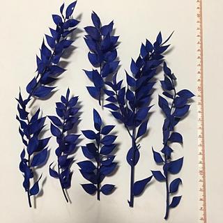 ラスカス  海  ブルー  青色  東北花材 プリザーブドフラワー(プリザーブドフラワー)