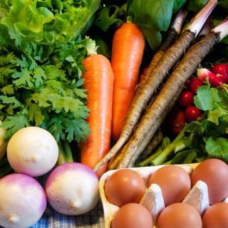 大山山麓無農薬無化学肥料栽培野菜8-9品卵10個【送料込】(野菜)