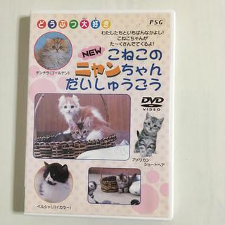 こねこのニャンちゃんだいしゅうごう DVD