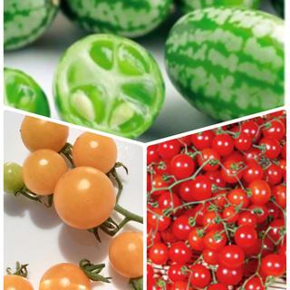小さなお野菜の種セット  3種(その他)