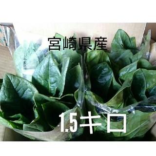おっきなほうれん草 約1.5キロ以上 箱パンパン(野菜)
