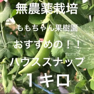 ハウス栽培の無農薬!朝摘み新鮮!!約1キロ ハウススナップ☆即購入可能!!(野菜)