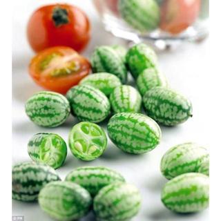 珍しくて美味しい不思議なキュウリとランプ型のトマト。   4/23(野菜)