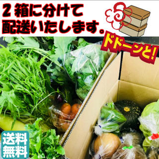 無農薬野菜 送料無料 長崎無農薬野菜 12品メガ盛り長崎野菜 朝採れ直送 野菜(野菜)