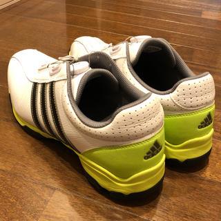 adidas - adidas golf ゴルフシューズ
