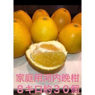 河内晩柑 宇和島 みかん 美生柑 グレープフルーツ ビタミン(フルーツ)