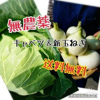 熊本県☆送料無料新玉ねぎ&キャベツセット