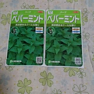 【サカタのタネ❗】ペパーミントの種子 2袋セット🌿(野菜)