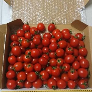 ミニトマト  1キロ!!