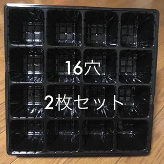 【manami様専用】育成トレイ16穴(多肉植物1つおまけ付き)(プランター)