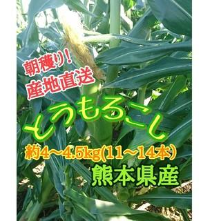 トウモロコシ(ゴールドラッシュ)熊本県産