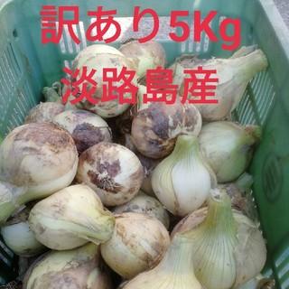★訳あり5Kg★淡路島新玉ねぎ(野菜)