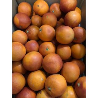 ブラッドオレンジM(フルーツ)