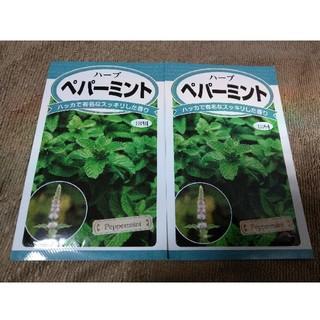 ペパーミント 種 2個セット(野菜)