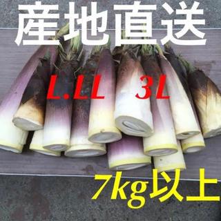 静岡県産☆ たけのこ 7kg以上!米ぬか付き♪ 大きめサイズ(野菜)