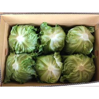 送料無料 早朝採り新鮮野菜セット! レタス ほうれん草 カリーノケール&花芽(野菜)