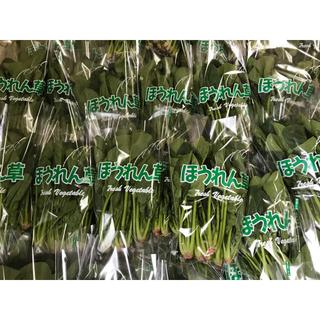 新鮮野菜セット!カリーノケール&花芽 レタス ほうれん草 発送日収穫 送料無料(野菜)