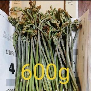 天然わらび 山菜 600g(野菜)