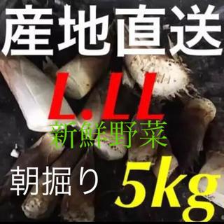 静岡県産☆ 朝掘り!新鮮! たけのこ 5kg  米ぬか付き♪ 3日以内発送(野菜)