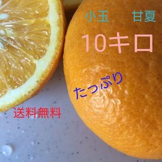 たっぷり 小玉 甘夏  10キロ(フルーツ)