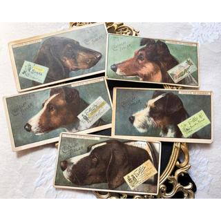 ★アンティーク*フランス*ワンちゃんのチョコレートカード5枚★犬(その他)